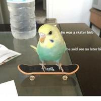 skaterbirb182
