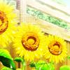 foony_sunflower