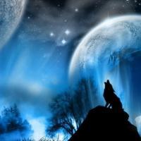 wolfflesprime