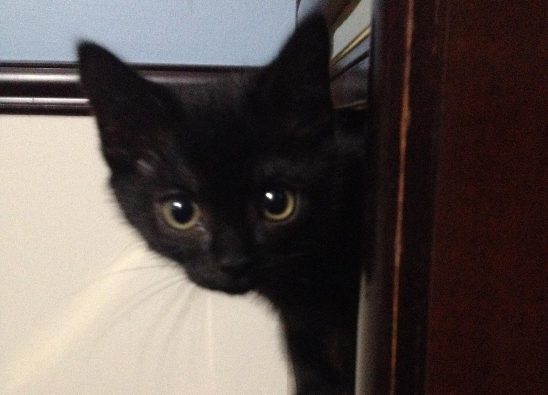Baby Kiki!