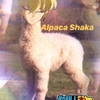 alpaca_shaka